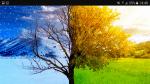 Die Territorien des Winter und Sommerclan: Sommerclan: Territorium: Der Sommerclan lebt im dichten Michwald mitten in ihrem Territorium ist eine freie