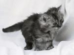 Name: Geisterjunges Alter: 0 Monde Geschlecht: W Aussehen: schlanke grau weiße Kätzin mit grauen Augen Charakter: still, zurückhaltend, geheimnisvo