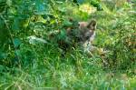 Schreib deine eigene Wolfs-Geschichte