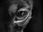 Wolfeye - Projekt Wolf