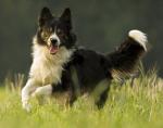 Hundeversteher