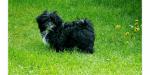 Die 5 kleinsten Hunde der Welt