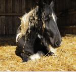 Die 6 besten Pferderassen