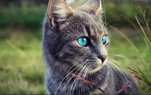FlammenClan - Alle Katzen + Bilder