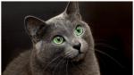 Warrior Cats RPG: Die vier Clans