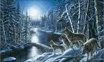 Wie nennt man Wölfe die in Gruppen leben Rudel Herde Bande