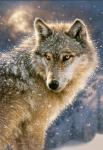 Leben wölfe noch oder haben sie je exestiert Nein das ist nur eine Legende Es garb sie mal aber sie wrden alle wegen ihrem pelz getötet Ja es gibt s