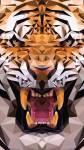 Fast geschafft, noch zwei Fragen... Ein Tiger ist eine Amphibie