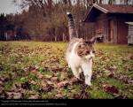 Camp der Katzen (MMFF)