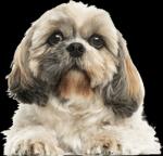 Hunde Quiz