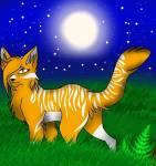 Die hübsche Kätzin Dornensee aus dem SonnenClan! Einer der tollen Charaktere von Nordwind. (- Arkani:3)