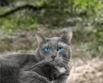 Name: Aschenfuchs Tier: Katze Geschlecht: männlich Rang: Krieger Alter: 48 Monde Aussehen: hellgrauer Kater mit blauen Augen Chara: wild, arrogant, k