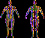 Kibbe Körpertyp Test - Die 5 Grundtypen