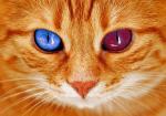 Der Feuerclan-Eine Warrior Cats RPG