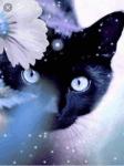 Die 4 Elemente | Warrior Cats | Teste dich