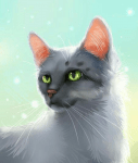 Teste dich Warrior Cats