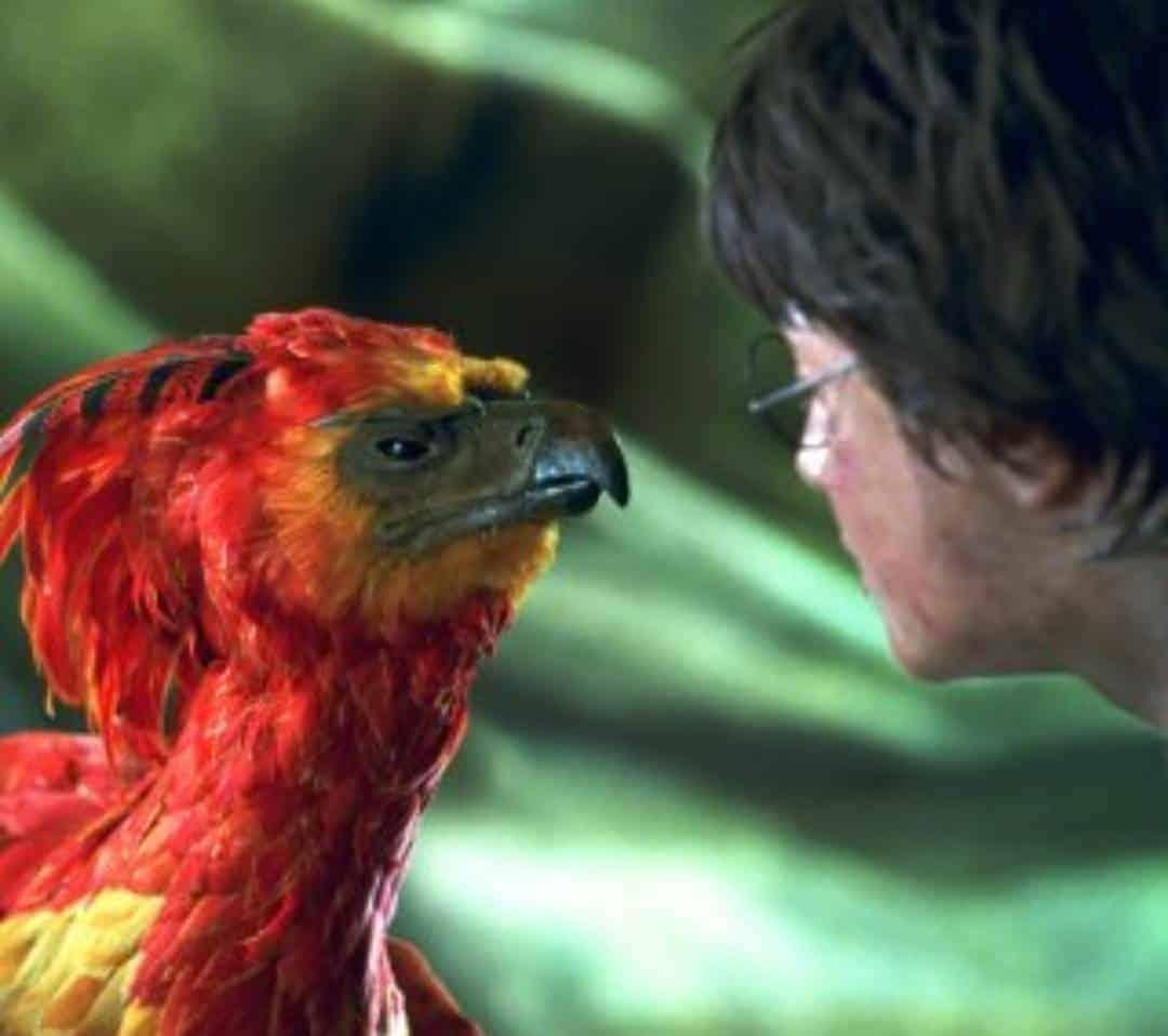 Harry Potter Und Die Torte Des Phonix