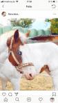 Kennst du dich gut mit Pferden aus?
