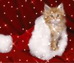 ((bold))Der Steckbrief:((ebold)) Name: (bitte kein Autoreifen oder Mikrowellenherz etc..) Aussehen: Keine grünen Katzen mit Neon pinken Augen oder so