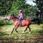 Wie alt war ihr Pferd als Mia es bekommen hat? ( Stand 2018 )