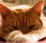 Hier kommen jetzt noch die Bilder der Katzen und der wichtigsten Orte. Morgennebel