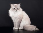 Warrior Cats Namentest