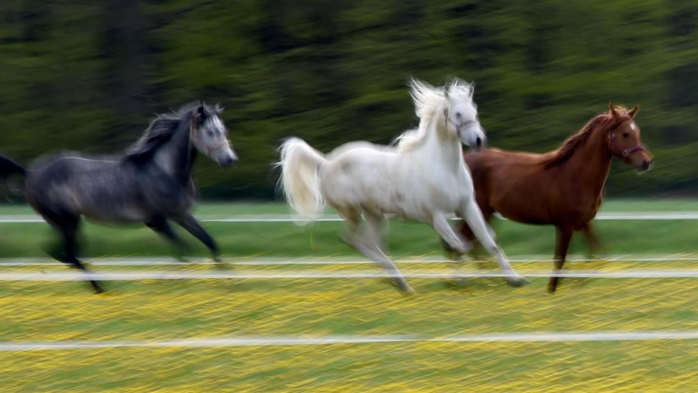 Welche Pferderasse ist perfekt für mich?