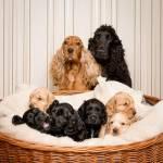 Bist du ein Hundeprofi?