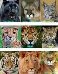 Clans der Savanne
