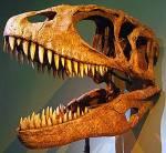 Wer war der größte von den nun genannten Dinosauriern?
