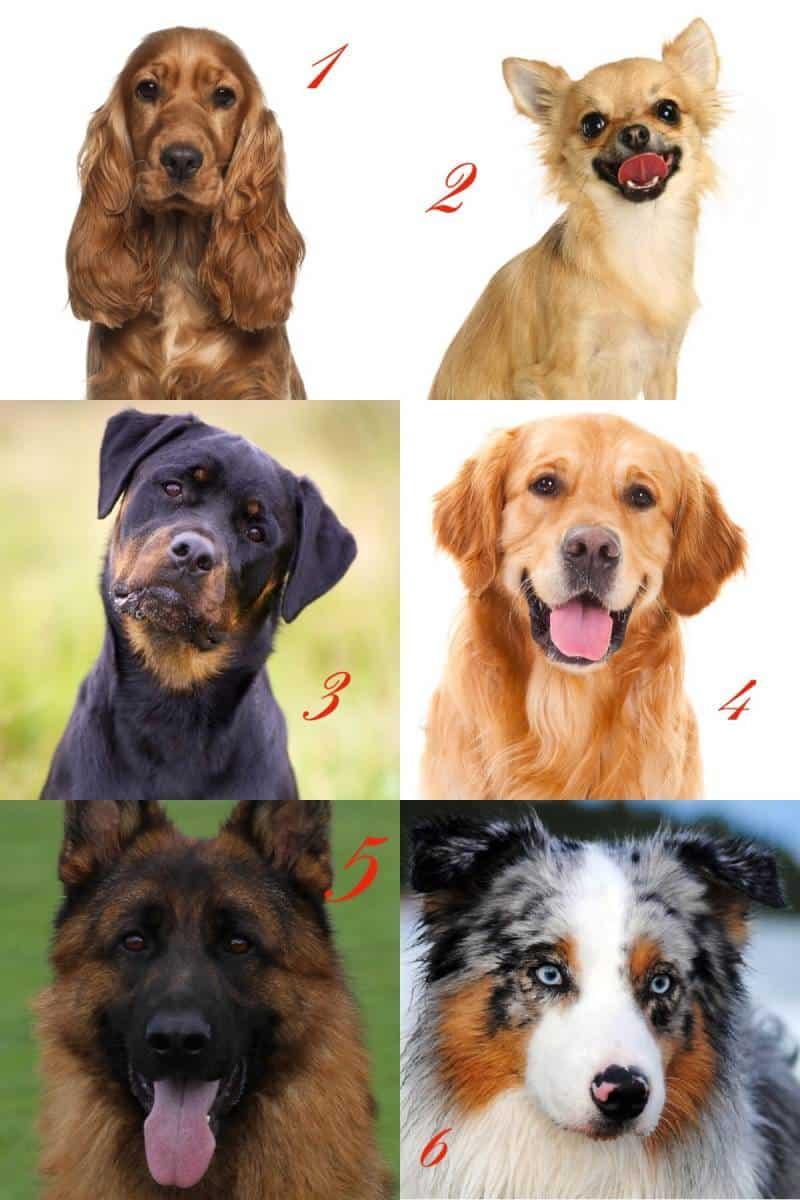 Test Welcher Hund Passt Zu Mir