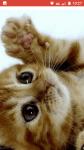 Warrior Cats dunkele Zeiten