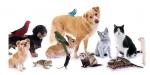 Welches Tier magst du am meisten? 😁
