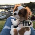 Welche Hunderasse passt perfekt in ihr Leben?