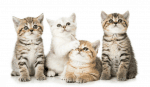 Katzen unsere Stubentiger