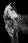 Pferde- Wissenstest