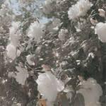 ((bold))((gray)) Das Haus Crystal Swan ((egray))((ebold)) Haus-Tier: Schwan Haus-Farbe: Perlmutt weiß Hauslehrer: Mr. Lumière Information zum Haus: