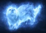 Harry-Potter-Patronus-Quiz (Leicht)
