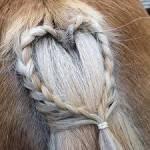 Welche Frisur bekommt mein Pferd heute?