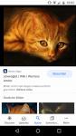 Dein Warrior Cats Steckbrief