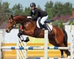Freiheitsdressur mit Pferden...