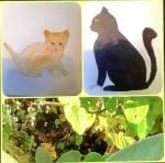 Warrior Cats - bist du bereit, Heiler zu werden?