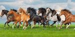 Was für ein Pferd passt zu mir?