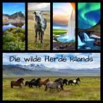 Die wilde Herde Islands