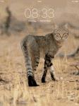 Deine Familie + deine Namen in Warrior Cats
