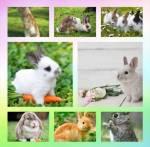 Das Kaninchen RPG