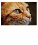 5 interessante Fakten über Katzen