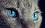 Warrior Cats Buch 1 bis 3!