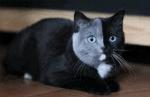 WaCa Katzen für dein Profil
