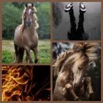 Steckbriefseite für die Pferde, Einhörner und Pegasien für Himmel gegen Hölle
